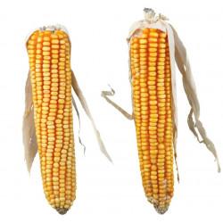 Epis de maïs - 250g