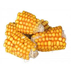 Morceaux épis de maïs - 300g